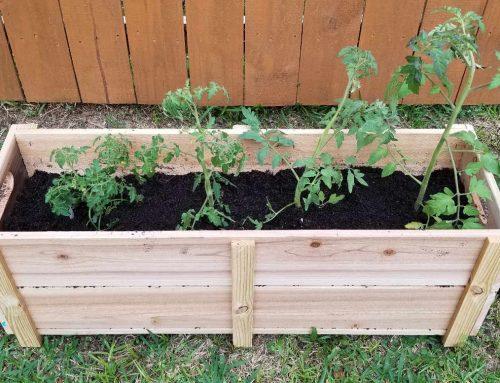 Gheorghe's Cedar Garden Box