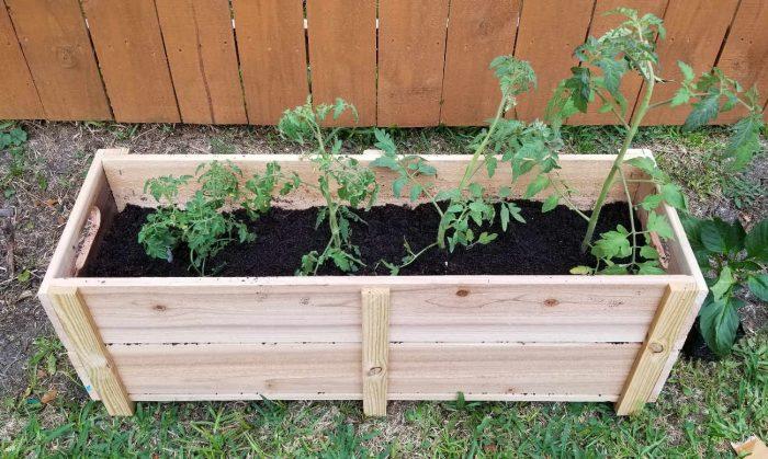 cedar garden box
